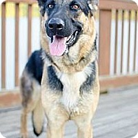 Adopt A Pet :: Raina - Hilliard, OH