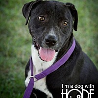 Adopt A Pet :: Palmer - Godfrey, IL