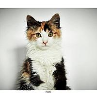 Adopt A Pet :: Rosita - New York, NY