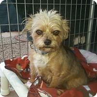 Adopt A Pet :: Farley - Acton, CA