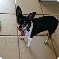 Adopt A Pet :: Gertie - Edmond, OK