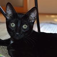 Adopt A Pet :: Whitey - Walnut Creek, CA