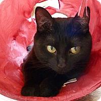 Adopt A Pet :: Jetta - St. Louis, MO