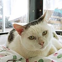 Adopt A Pet :: Owen - Santa Paula, CA