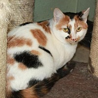 Adopt A Pet :: Airabell - Cottageville, WV