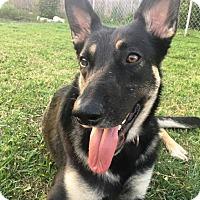 Adopt A Pet :: Gracie - Pleasant Grove, CA