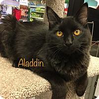 Adopt A Pet :: Aladdin - El Dorado Hills, CA