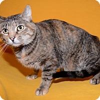 Adopt A Pet :: Glinda - Salt Lake City, UT