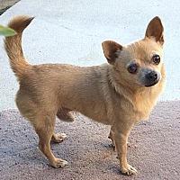 Adopt A Pet :: Nugget - Vista, CA
