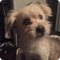 Adopt A Pet :: Sandy - Pleasant Hill, CA