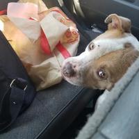 Adopt A Pet :: A.C.E - Greenville, KY
