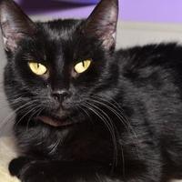 Adopt A Pet :: Emma - Elkhorn, WI