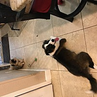 Adopt A Pet :: Murphy - Crestview, FL