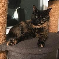 Adopt A Pet :: Marley - Naugatuck, CT