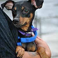 Adopt A Pet :: Felix - Reisterstown, MD