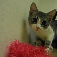 Adopt A Pet :: Digby - Milwaukee, WI