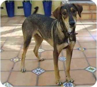 Hound (Unknown Type) Mix Dog for adoption in Palmdale, California - Grommit