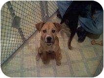 Retriever (Unknown Type) Mix Puppy for adoption in Alliance, Nebraska - Paisley