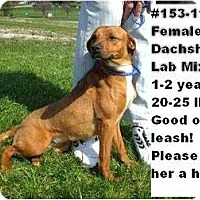 Adopt A Pet :: # 153-11 @ Animal Shelter - Zanesville, OH