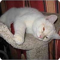 Adopt A Pet :: Blu - Mesa, AZ
