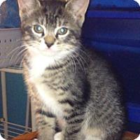 Adopt A Pet :: Pretty - Piscataway, NJ