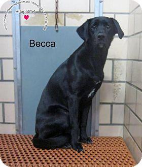 Labrador Retriever Mix Dog for adoption in Sidney, Ohio - Becca