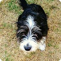 Adopt A Pet :: Padre - Austin, TX