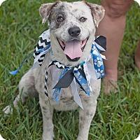 Adopt A Pet :: Tyrion - Kingwood, TX