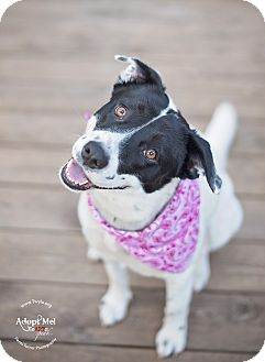Border Collie Mix Dog for adoption in Kingwood, Texas - Betty Boop