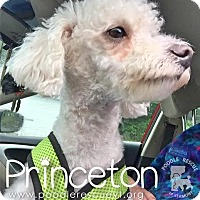 Adopt A Pet :: Princeton - Essex Junction, VT