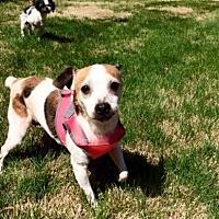 Adopt A Pet :: Wendy - Columbus, IN