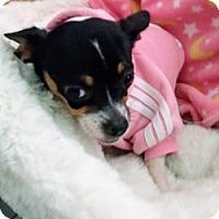 Adopt A Pet :: Sansa - Mesa, AZ
