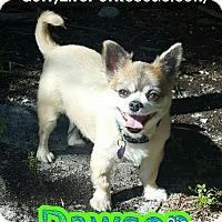 Adopt A Pet :: Dawson - Wellington, FL
