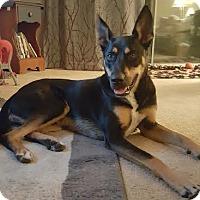 Adopt A Pet :: Tucker D3708 - Shakopee, MN