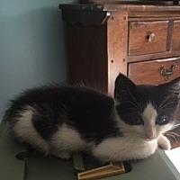 Adopt A Pet :: Huey Lewis - Smyrna, GA