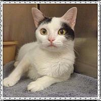 Adopt A Pet :: LUCY - Marietta, GA