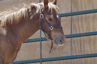 Thoroughbred Mix for adoption in Hartville, Wyoming - Fabio