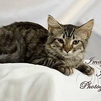 Adopt A Pet :: Lily - Hinton, OK