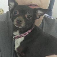 Adopt A Pet :: Lola - Pearland, TX