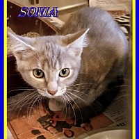 Adopt A Pet :: Sonia - Berkeley Springs, WV