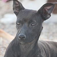 Adopt A Pet :: Dannie Big Dog - Hooksett, NH