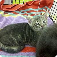 Adopt A Pet :: Cody - Vero Beach, FL