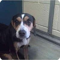 Adopt A Pet :: Lana - Phoenix, AZ