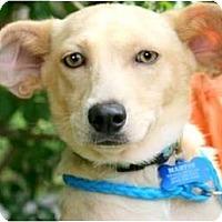 Adopt A Pet :: MARTIN - Hendersonville, TN