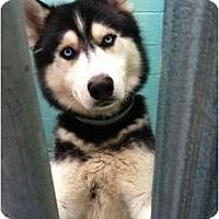 Adopt A Pet :: Puppy in Need - Huntington Station, NY
