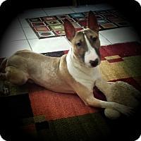 Adopt A Pet :: Max - Sachse, TX
