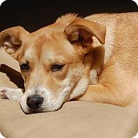 Adopt A Pet :: *Kenzie - PENDING - Westport, CT