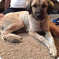 Adopt A Pet :: Mischka - Adoption Pending! - Croydon, NH