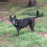 Adopt A Pet :: Franklin - North Wilkesboro, NC
