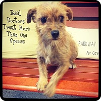 Terrier (Unknown Type, Small) Mix Puppy for adoption in Grand Bay, Alabama - Camrey